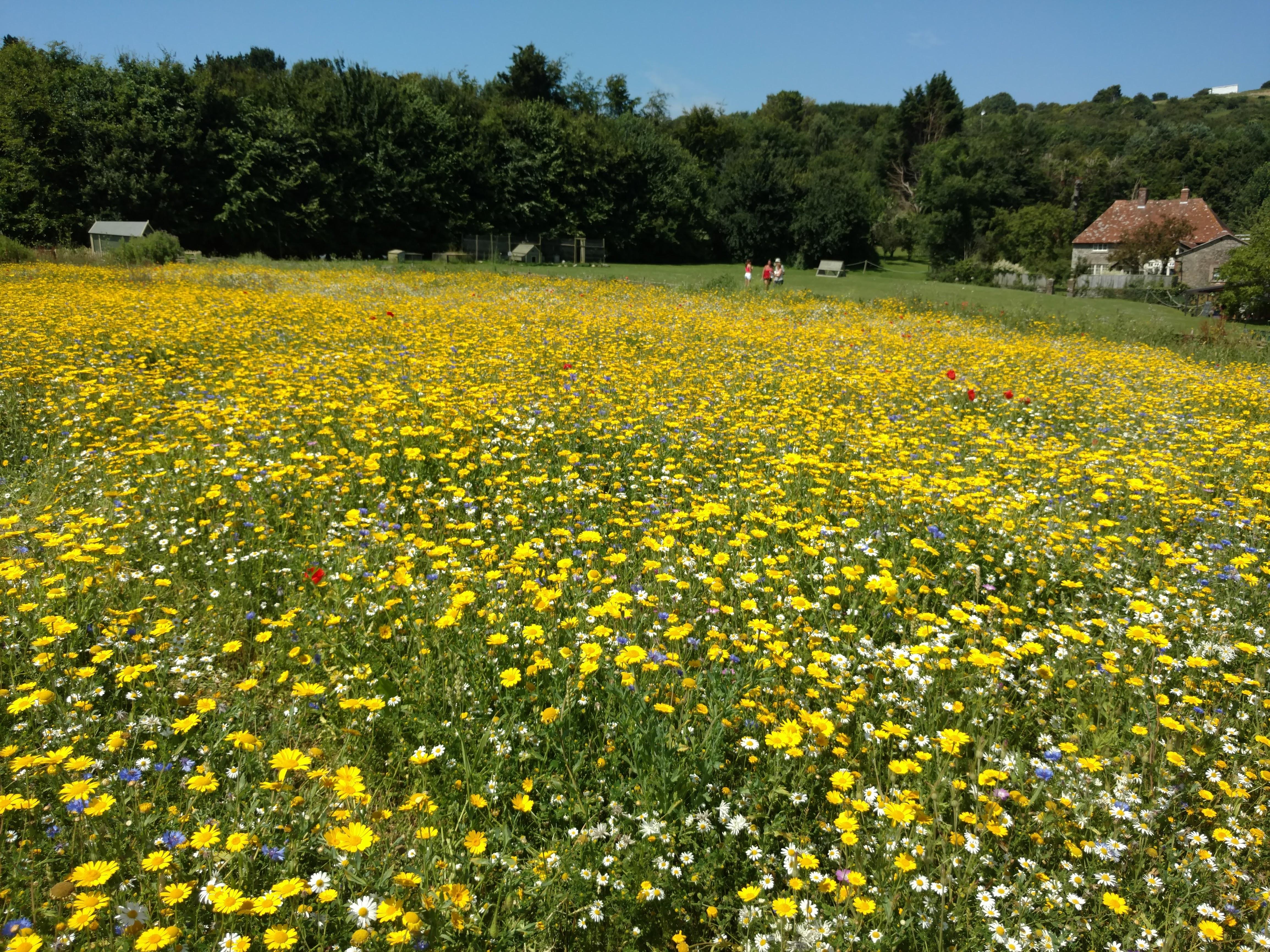 Wildflowers at The Garlic Farm