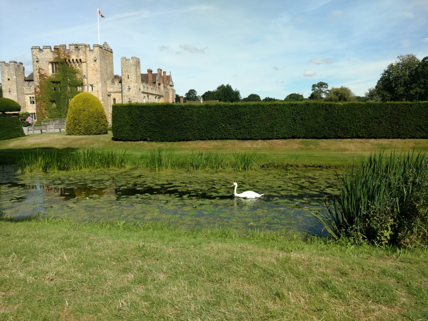 A swan at Hever Castle