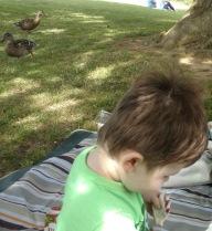 ducks at hever castle