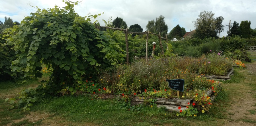 Wendy's garden at Priory Farm