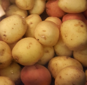 Boiling the potatoes.jpg