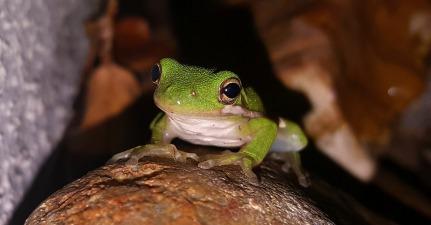 frog-1514727_1280.jpg